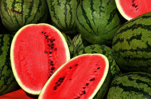 Watermelons love sunlight