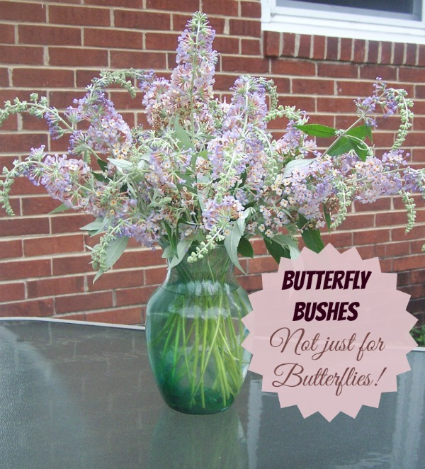 Butterfly Bushes make Wonderful cut flowers.