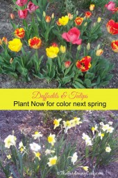 Plant Spring flowering bulbs in the fall