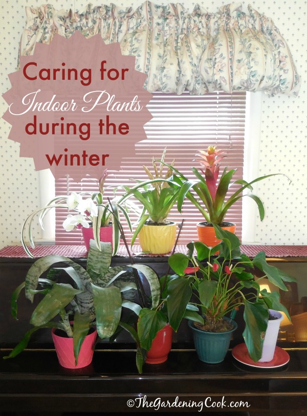 Here are some tips and tricks for indoor house plant care during the fall and winter months. Watch out for humidity levels, and be careful not to over water.