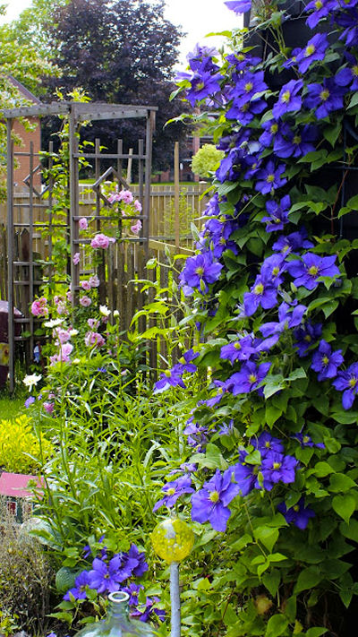 Rustic arbor with roses, clematis and daisies