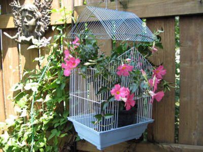Bird Cage planter on a garden wall.