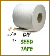 DIY Seed Tape made from Toilet paper