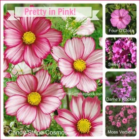 Pretty in Pink Flowers