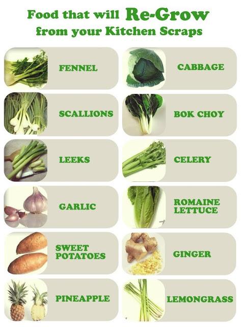 regrow your food