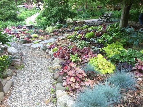 Paths lined with Heuchera in Stott Garden