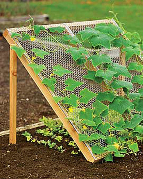 Cucumber Trellis to grow companion crops.