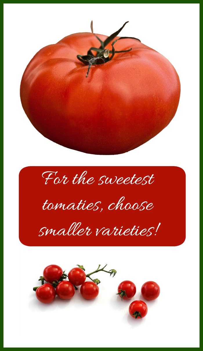 If sweetness is your aim in growing tomatoes, go for the smaller varieties such as cherry tomatoes