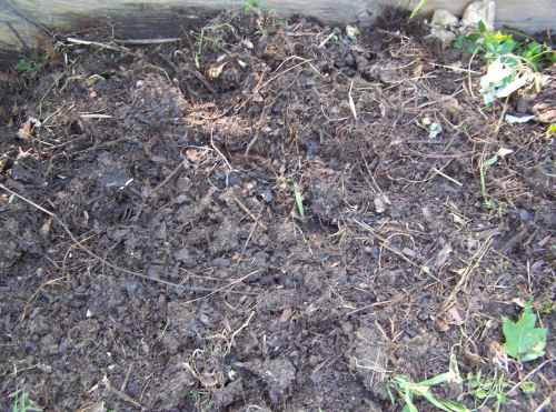 Pile has been turned once and is in the process of becoming compost