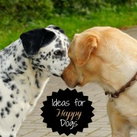 Ideas for happy dogs