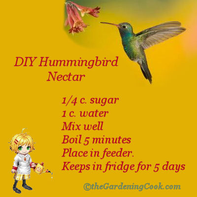 Diy Hummingbird Food Recipe