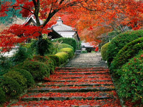 Famous Gardens of Kyoto Japan