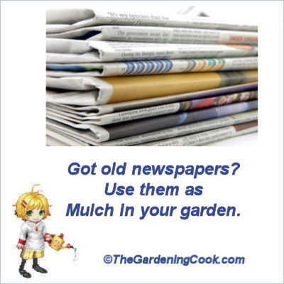Use newspapers as mulch.