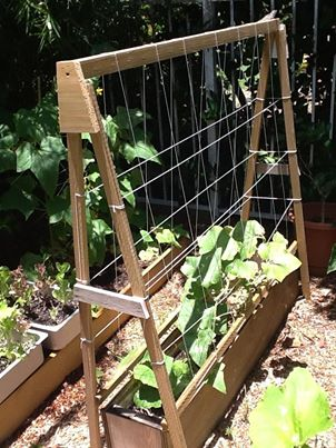 how to make a cucumber trellis