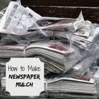 How to Make Newspaper Mulch