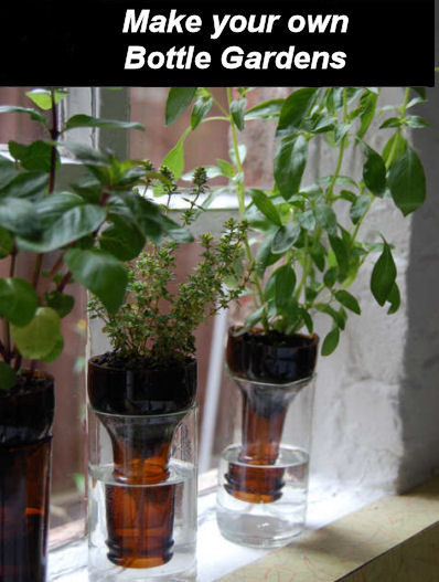 DIY self watering Bottle gardens.