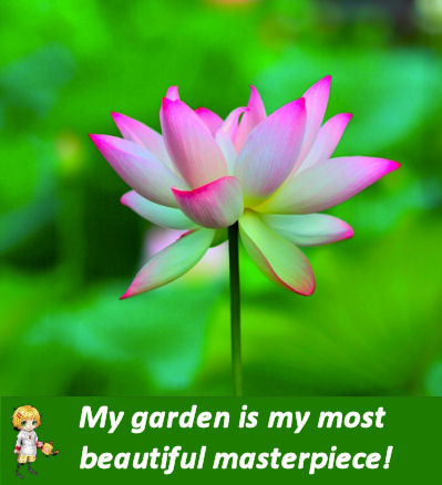 Lotus with Gardening quote