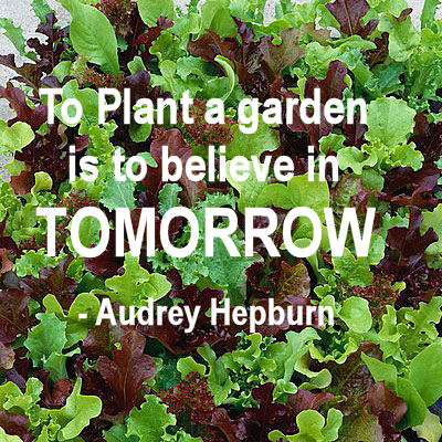 gardening quotes and inspirational sayings the gardening
