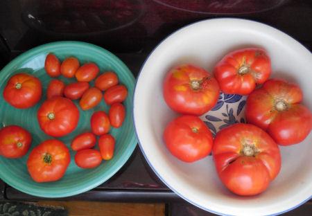 Ripened tomatopes