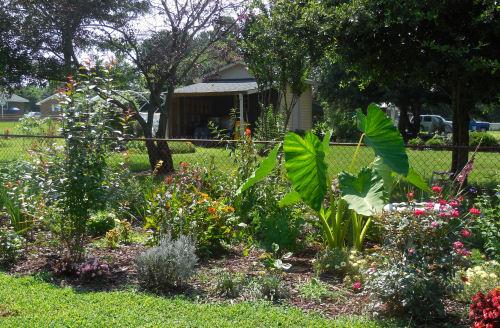 Garden left JUly 2013