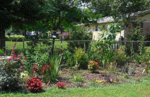 Garden right July 2013