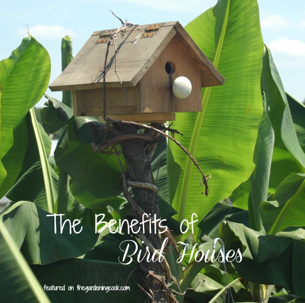 the benefits of having a bird house are many.