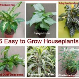 6 easy to Grow Houseplants