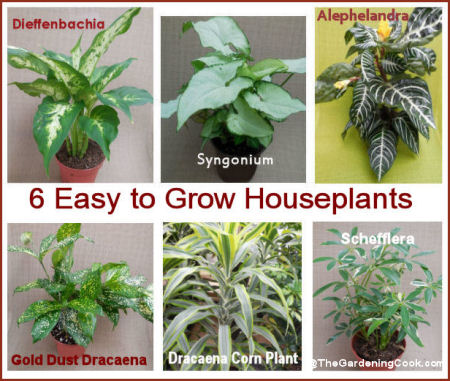 Easy Houseplants to grow, even if you have a brown thumb.