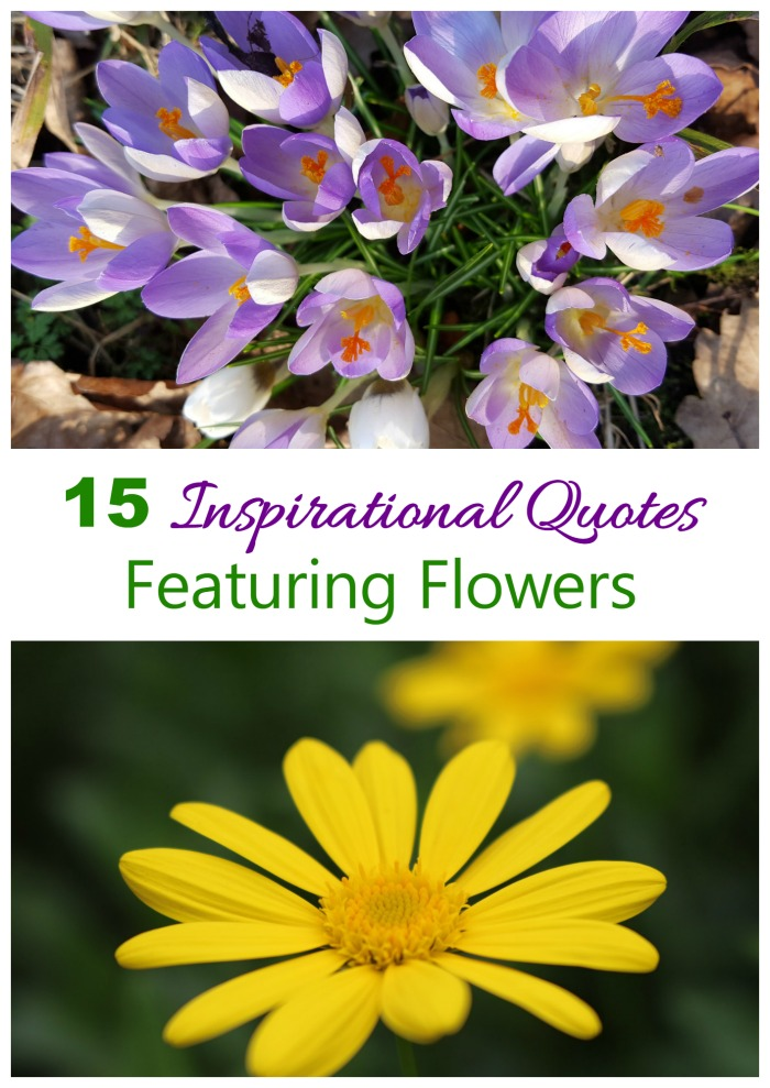 Inspirational Flower Quotes To Motivate - The Gardening Cook