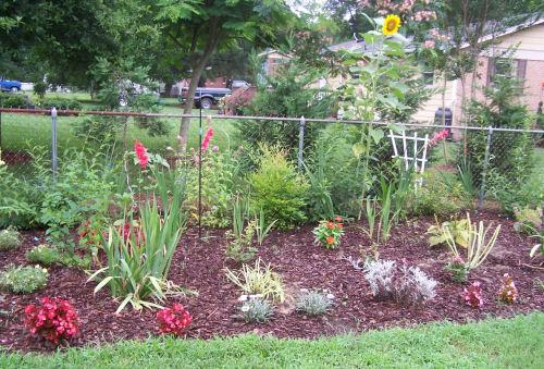 Test garden in July