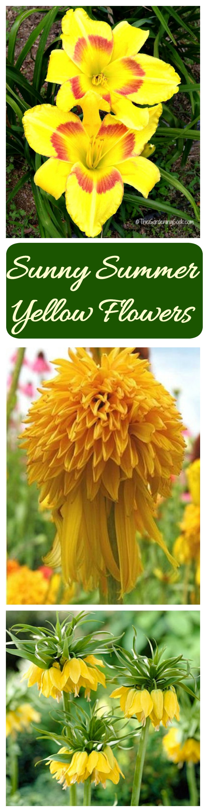 If you are looking for the perfect summer color for your garden, try growing yellow flowers. The color pops in the garden like no other color.