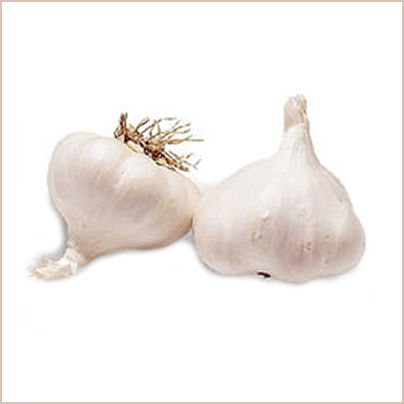 Plant garlic in the fall for a summer crop