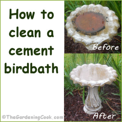shell stone bird bath garden bird baths bird baths