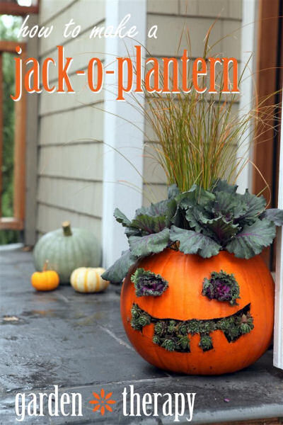 Jack-O-Plantern planted with succulents.
