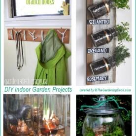 DIY Indoor Garden projects