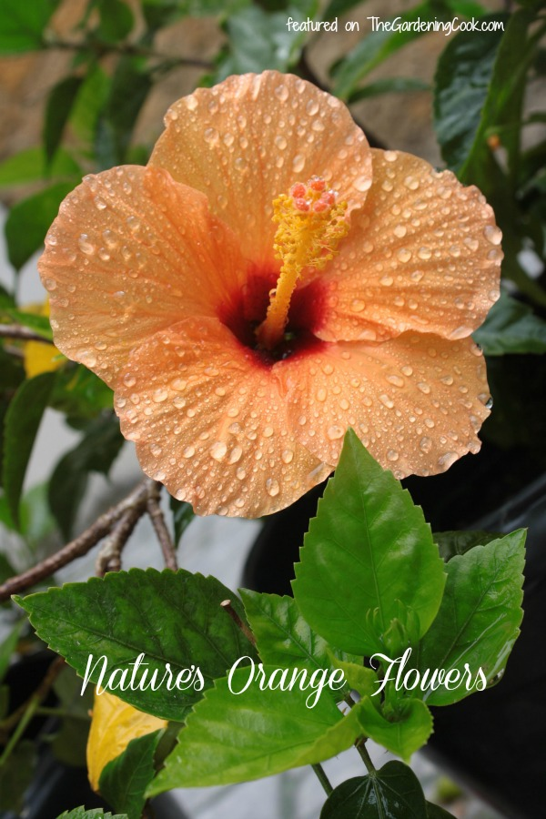 A collection of the best orange flowers