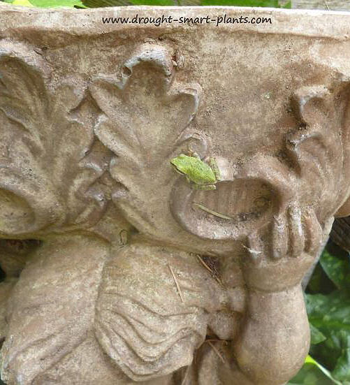 Frog on Angelic planter