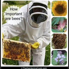 How important are bees?