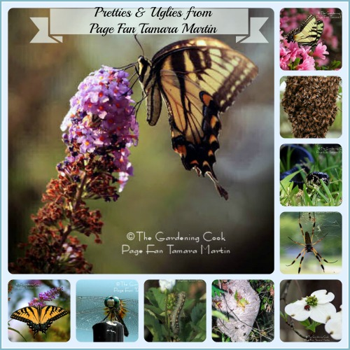 Pretties and Uglies in the Garden