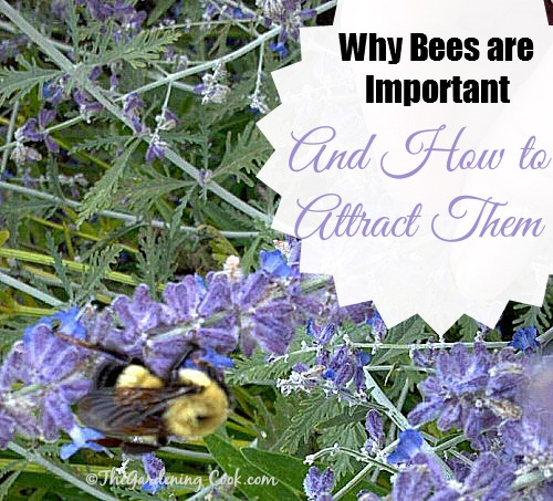 Bees are so important in our gardens. Find out why and how to attract them at http://thegardeningcook.com/the-importance-of-bees-in-nature/