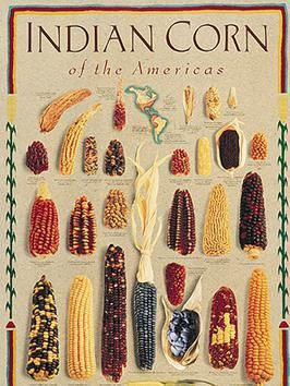 Varieties of Indian Corn