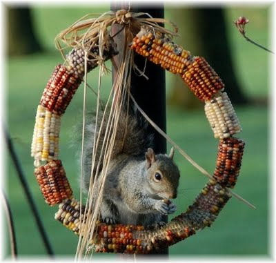 Squirrel and Bird Feeder made of Indian corn.