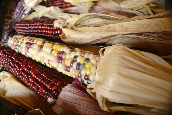 Indian corn is great for decorating with.