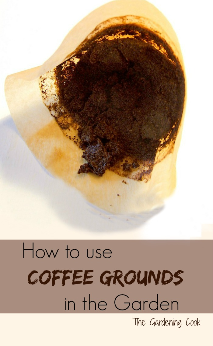 Don't throw those used coffee grounds away. See how to use them in the garden! thegardeningcook.com