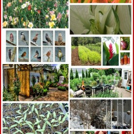 The Garden Charmers Favorite Facebook pages