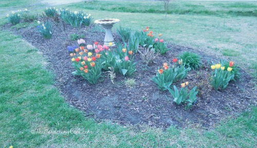 My front garden bed in April