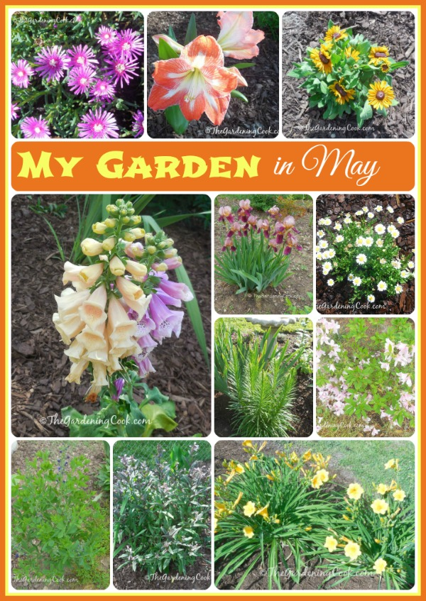 this is just a hint of my garden in North Carolina in May. See more great photos and lots of details at http://thegardeningcook.com/gardening-in-may/