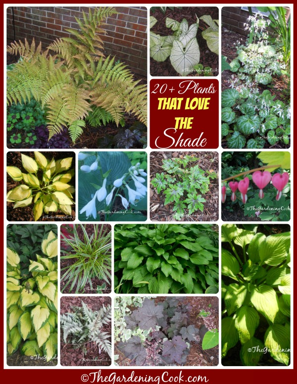 A collection of more than 20 plants that thrive in a shade garden - see them all at thegardeningcook.com/plants-for-a-shade-garden
