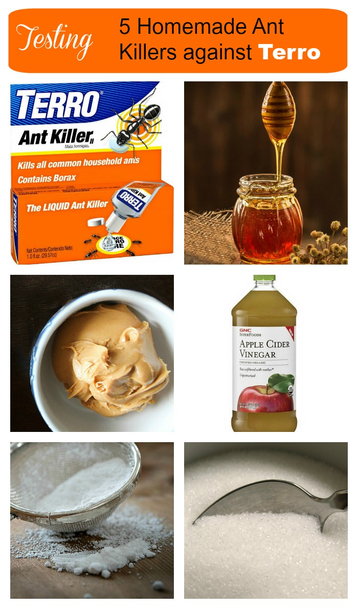 I recently test five homemade ant killers against the retail product Terro. Find out which ones worked best for me