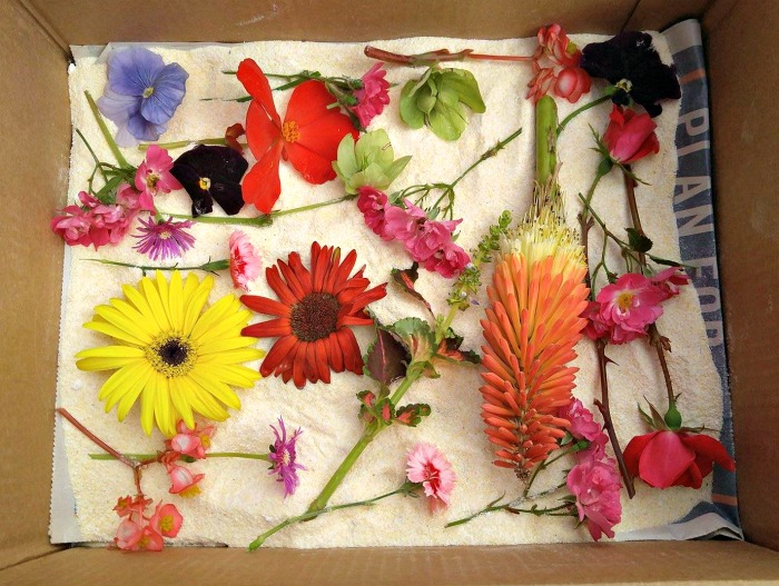Use Borax and Cornmeal to preserve flowers.